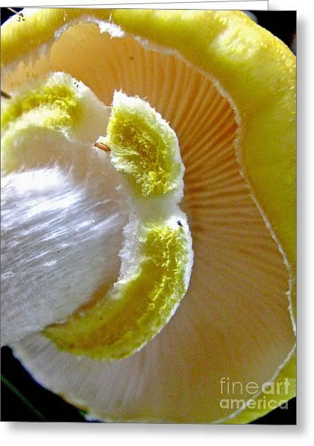 Button Mushrooms Greeting Cards - Pretty and Yummy Greeting Card by Selma Glunn