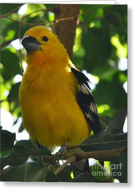 Struckle Greeting Cards - Pretty Bird Greeting Card by Kathleen Struckle