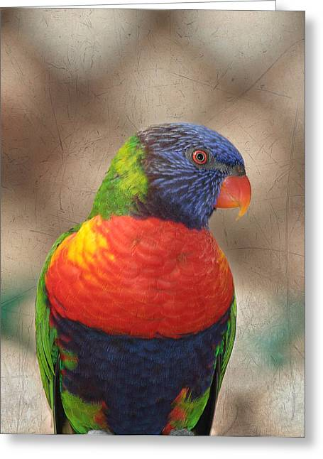 Coloured Plumage Greeting Cards - Pretty Bird - Rainbow Lorikeet Greeting Card by Kim Hojnacki