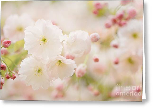 Sun Room Digital Art Greeting Cards - Pretty Blossom Greeting Card by Natalie Kinnear