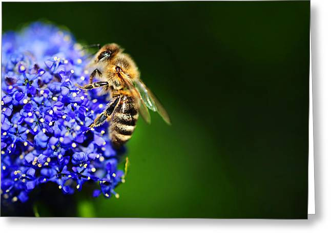 At Work Greeting Cards - Pretty Busy Bee at Work in the Garden Greeting Card by Jenny Rainbow