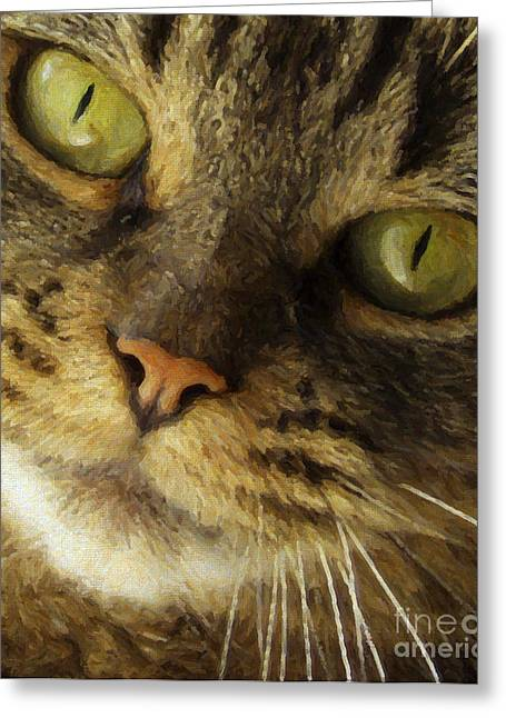 Cat Face Greeting Cards - Pretty Cat Face Greeting Card by Diane Diederich