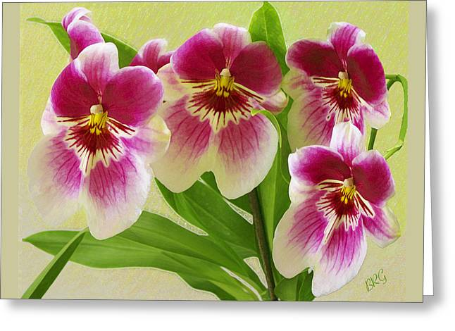 Pretty Faces - Orchid Greeting Card by Ben and Raisa Gertsberg