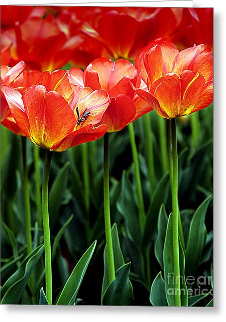 Best Sellers -  - Cheekwood Greeting Cards - Pretty Flowers Greeting Card by Jennifer Pinckney