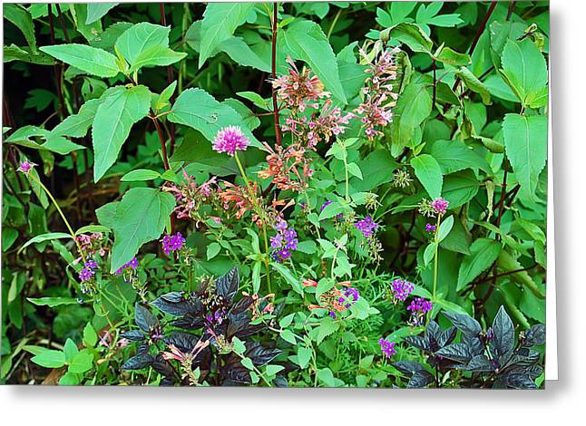 Botanical Greeting Cards - Pretty Garden Greeting Card by Aimee L Maher Photography and Art