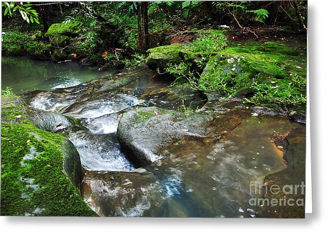 Pretty Green Creek Greeting Card by Kaye Menner