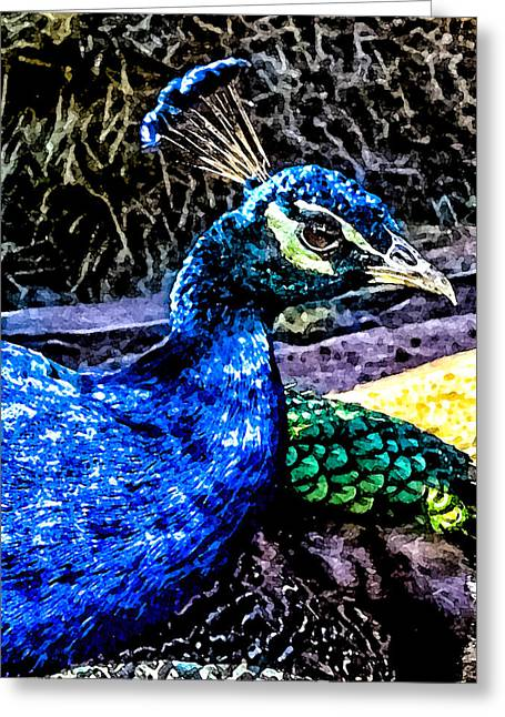 Green Day Greeting Cards - Pretty in Peacock Greeting Card by Toma Caul