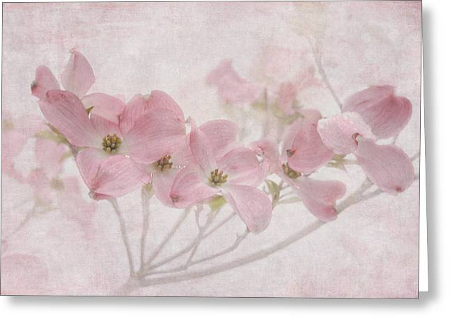 Dogwood Blossom Greeting Cards - Pretty in Pink Greeting Card by Angie Vogel