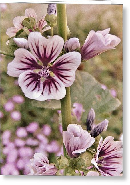 Close Focus Floral Mixed Media Greeting Cards - Pretty In Pink Greeting Card by Todd and candice Dailey