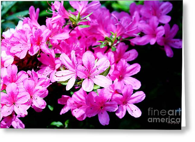 Pink Flower Branch Greeting Cards - Pretty in Pink Greeting Card by Cheryl Young