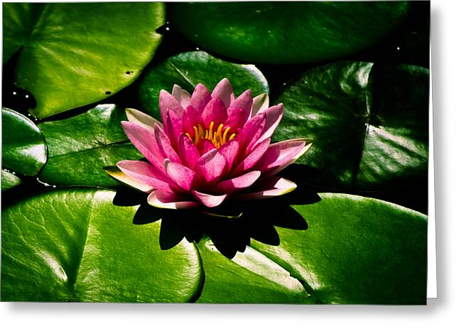 Lovely Pond Greeting Cards - Pretty in Pink Greeting Card by Christi Kraft