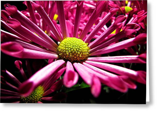 Greg Simmons Greeting Cards - Pretty in Pink Greeting Card by Greg Simmons