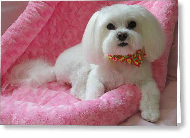 Pretty In Pink Greeting Card by Mary Beth Landis