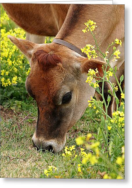 Dairy Farmers And Farming Greeting Cards - Pretty Jersey Cow - Vertical Greeting Card by Gill Billington
