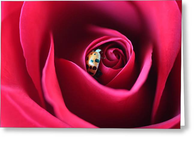 Artist Photographs Greeting Cards - Pretty Lady Greeting Card by  The Art Of Marilyn Ridoutt-Greene