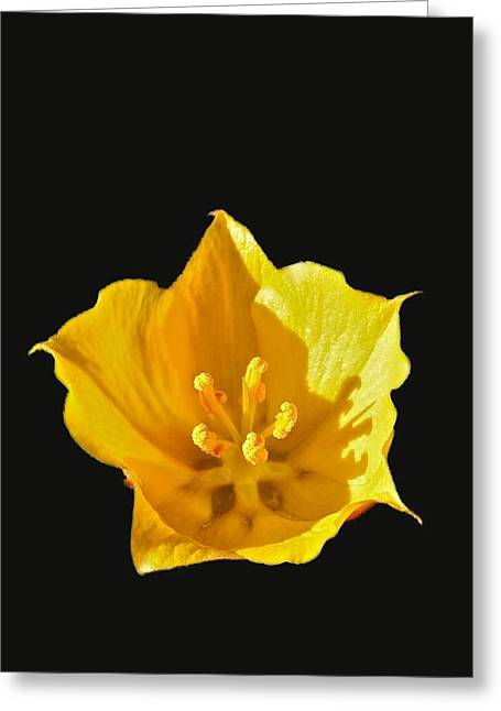 Stamen Pyrography Greeting Cards - Pretty Little Yellow Flower Greeting Card by DUG Harpster