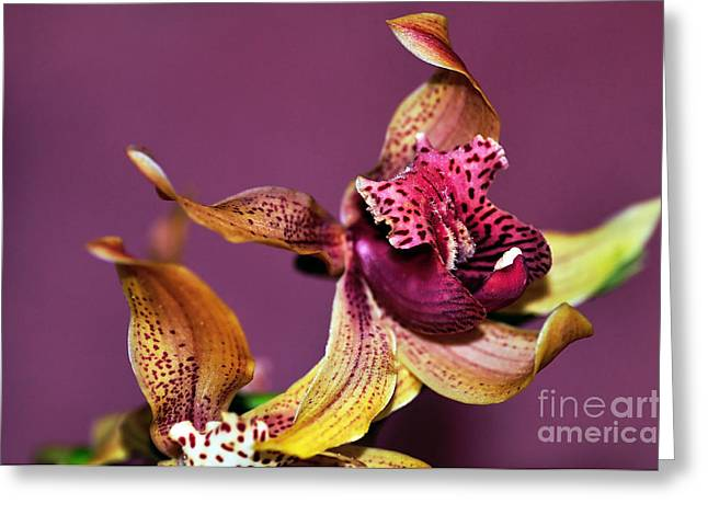 Colorful Orchid Greeting Cards - Pretty Orchid on Pink Greeting Card by Kaye Menner