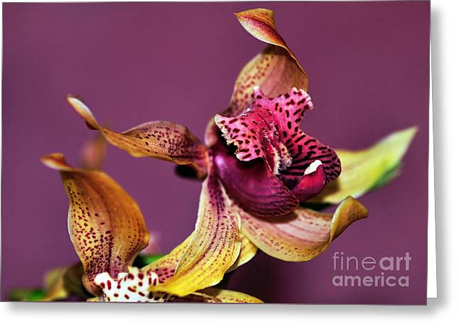Pretty Orchid On Pink Greeting Card by Kaye Menner