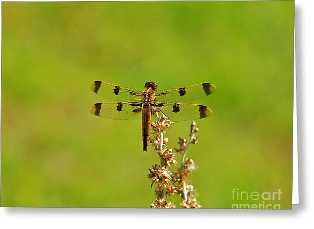 Dragon Fly Photo Greeting Cards - Pretty Painted Greeting Card by Al Powell Photography USA