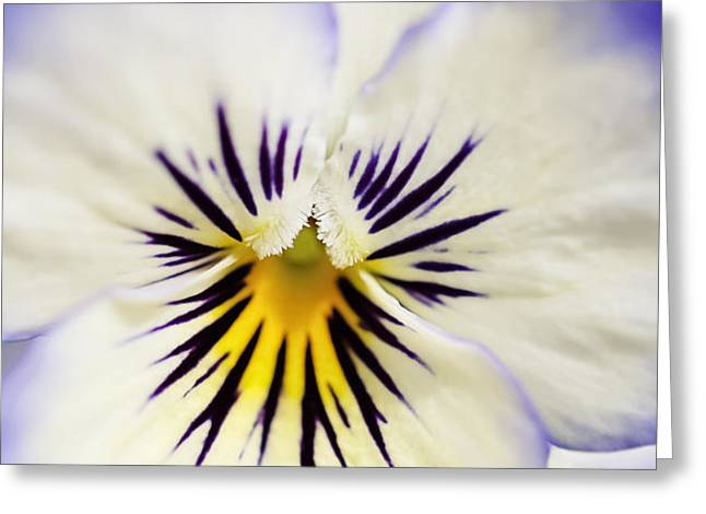 Pretty Pansy Close Up Greeting Card by Natalie Kinnear