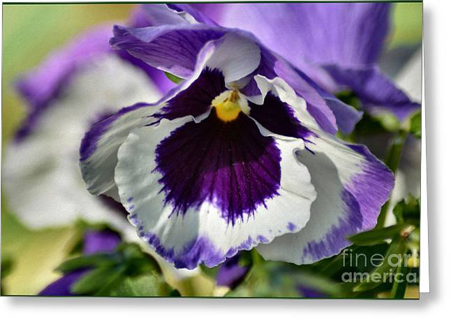 Blooms Greeting Cards - Pretty Pansy Flowers Greeting Card by Luv Photography