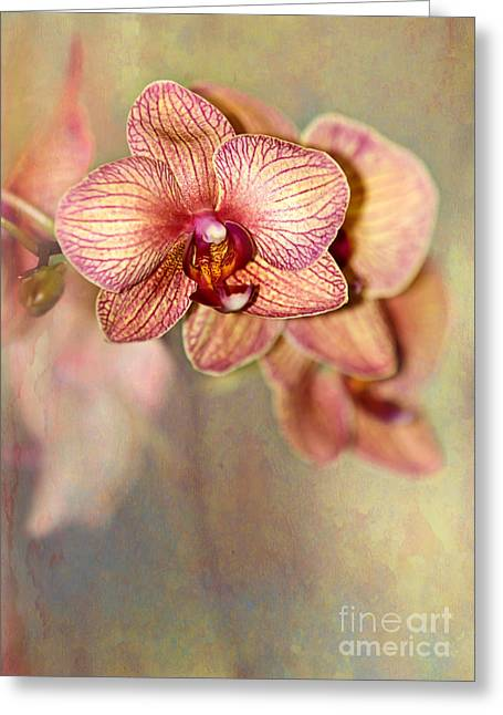 Florida Flowers Greeting Cards - Pretty Peach Phalaenopsis Orchids Greeting Card by Sabrina L Ryan