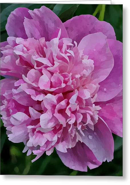 Indiana Flowers Greeting Cards - Pretty Peony Greeting Card by Sandy Keeton