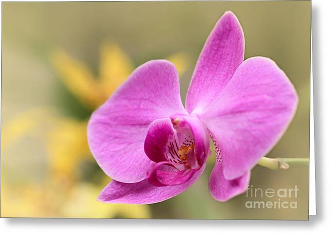 Pretty Pink Phalenopsis Orchid Greeting Card by Sabrina L Ryan