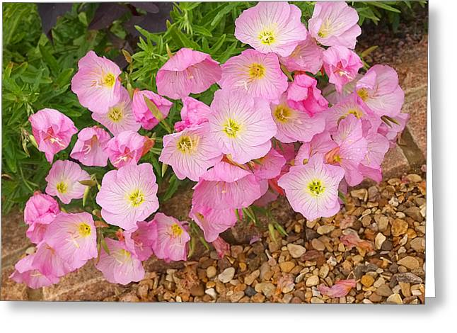 Gills Rock Greeting Cards - Pretty Pink Rock Roses in the Rain Greeting Card by Gill Billington
