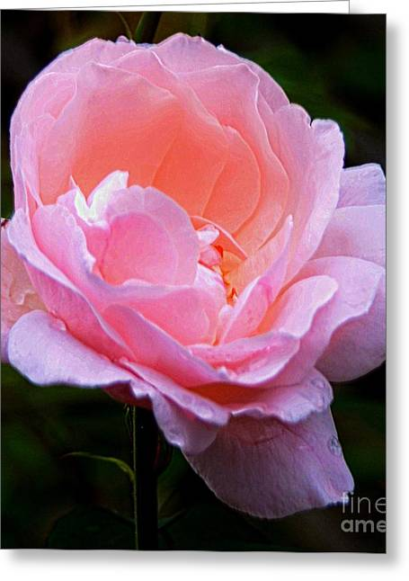 Struckle Greeting Cards - Pretty Pink Rose Greeting Card by Kathleen Struckle