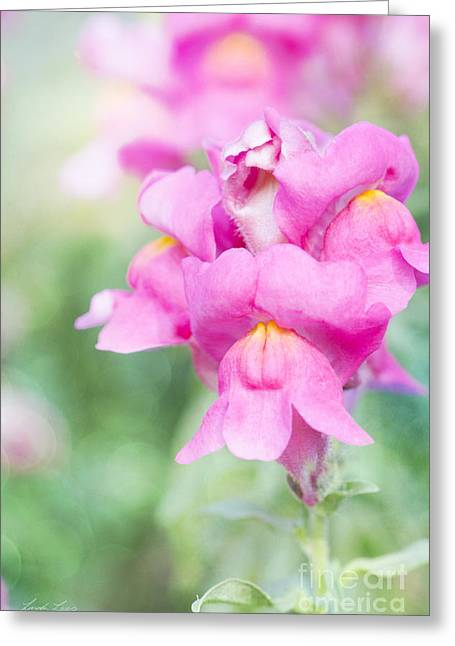Snapdragons Greeting Cards - Pretty Pink Snapdragons Greeting Card by Linda Lees