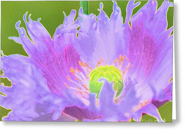 Struckle Greeting Cards - Pretty Poppy Greeting Card by Kathleen Struckle