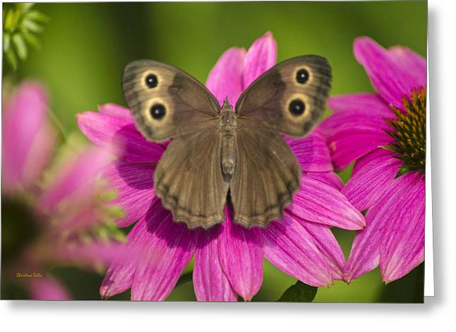 Animals Love Greeting Cards - Pretty Butterfly on Pink Flowers Greeting Card by Christina Rollo
