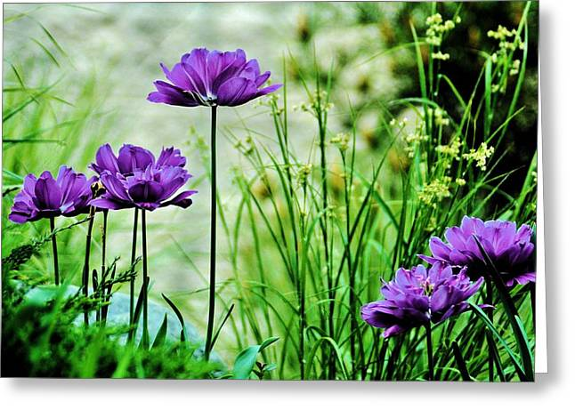 Michelle Greeting Cards - Pretty Purple Greeting Card by Michelle McPhillips