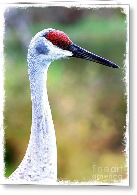 Sandhill Cranes Greeting Cards - Pretty Sandhill Profile with Textures Greeting Card by Carol Groenen