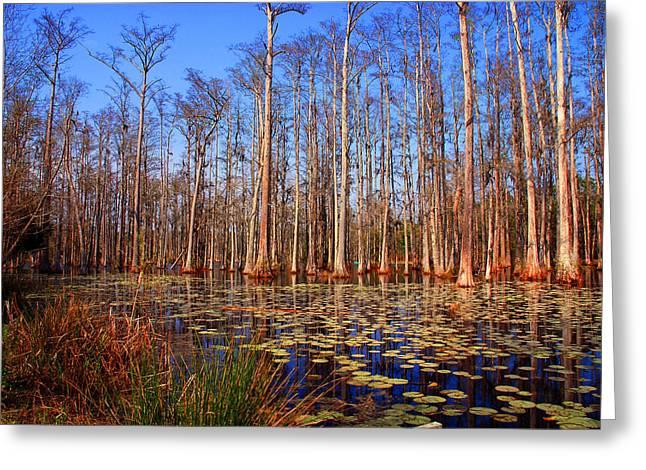 Pretty Swamp Scene Greeting Card by Susanne Van Hulst