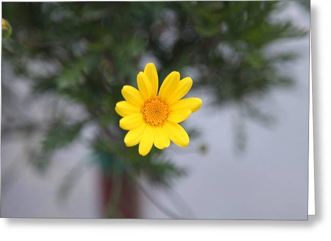 Pretty Yellow Flower Greeting Card by Michael French