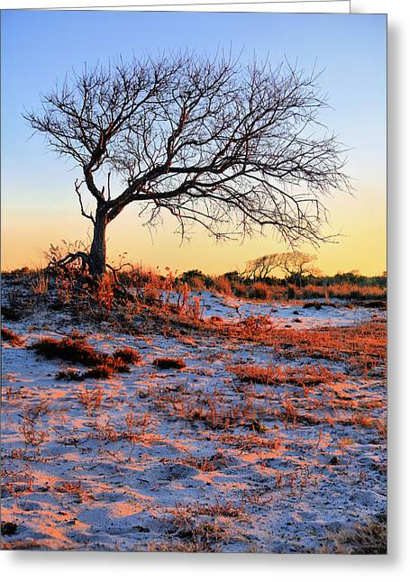 Delmarva Greeting Cards - Prevailing Greeting Card by JC Findley