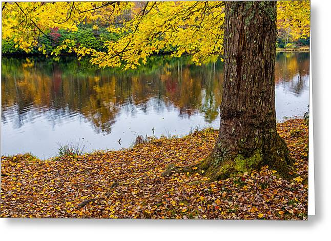 Price Greeting Cards - Price lake maple Greeting Card by Anthony Heflin