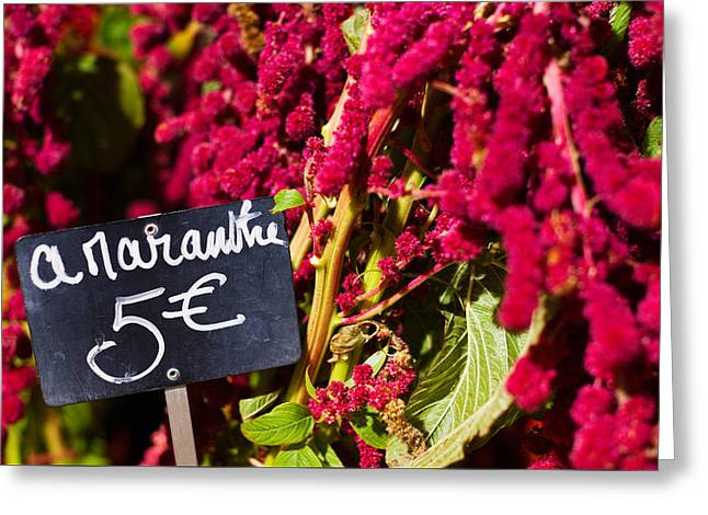 City Photography Greeting Cards - Price Tag On Amaranth Flowers Greeting Card by Panoramic Images