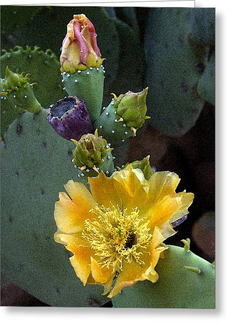 Prickly Greeting Cards - Prickly Colors Greeting Card by Robert Anschutz
