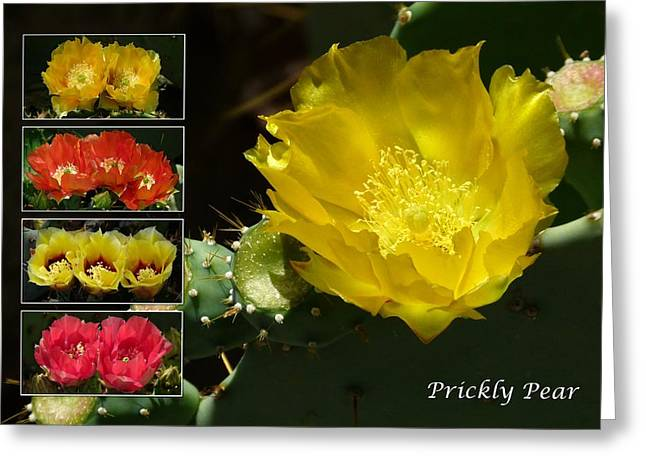 Cactus Southwest Cactus Flower Orange Wildflowers Nature Arizona Greeting Cards - Prickly Pear Cactus Collage Greeting Card by Cindy McDaniel