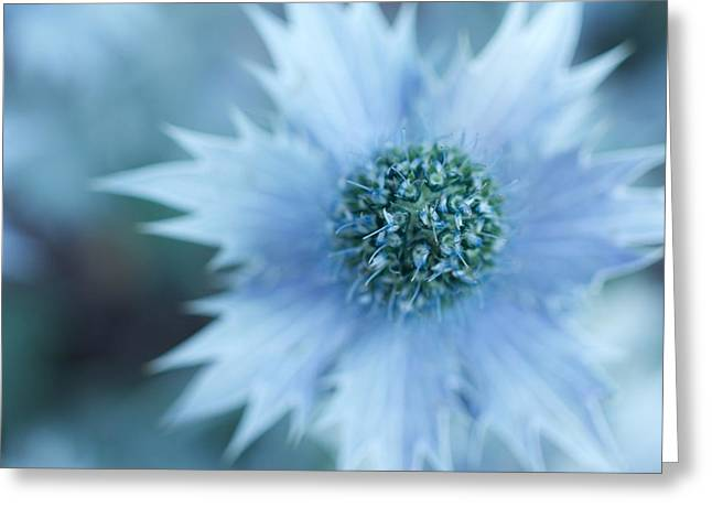 Pointy Petals Greeting Cards - Prickly Petals Greeting Card by April Aely