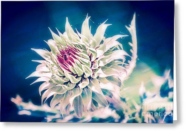 Botanical Greeting Cards - Prickly Thistle Bloom Greeting Card by Peggy  Franz