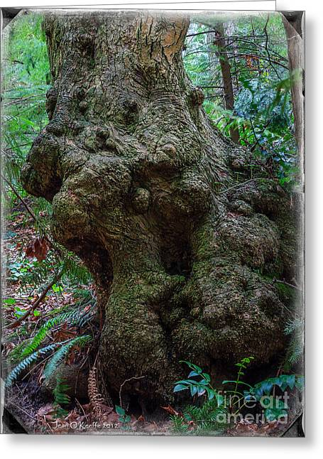 Gnarly Greeting Cards - Priest Point Park Gnarly Wood Greeting Card by Jean OKeeffe Macro Abundance Art