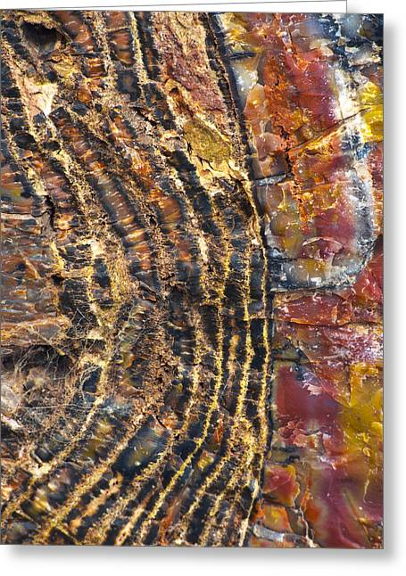 Petrified Forest Arizona Greeting Cards - Prime Cut 1 Greeting Card by Skip Hunt