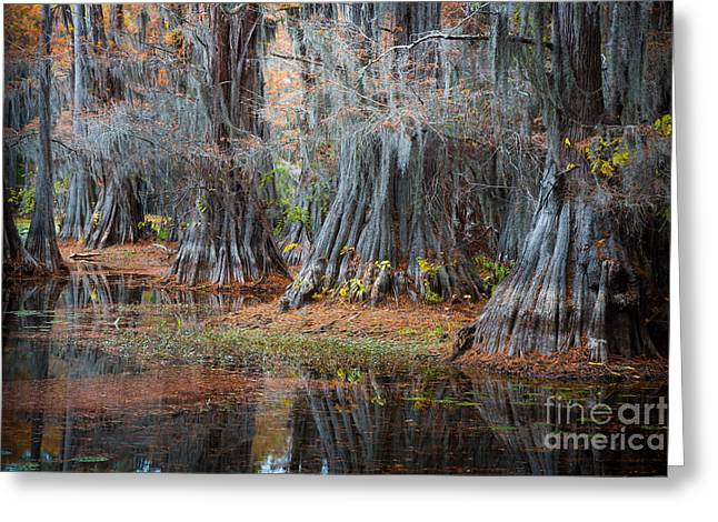 Caddo Lake Greeting Cards - Primeval Forest Greeting Card by Inge Johnsson