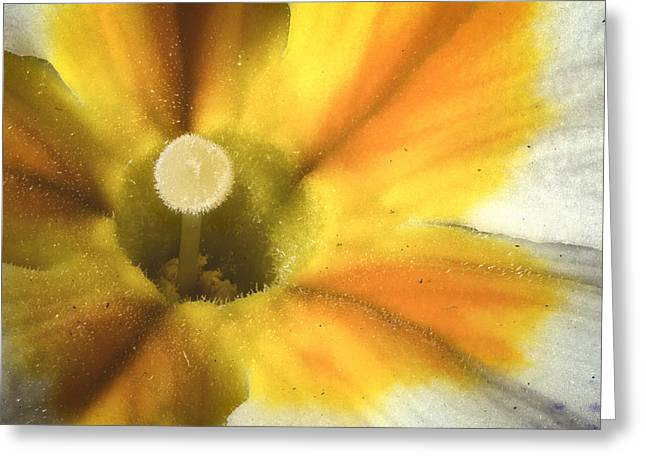 Primrose Closeup Greeting Card by Jean Noren