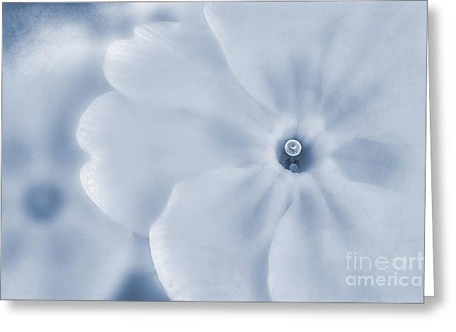 Close Focus Floral Greeting Cards - Primrose Cyanotype Greeting Card by John Edwards