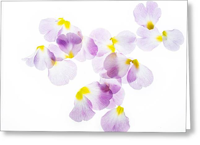 Primroses Photographs Greeting Cards - Primrose Petals 4 Greeting Card by Rebecca Cozart